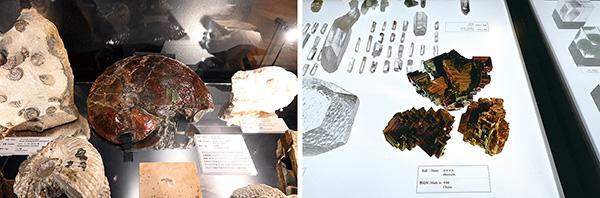 石は生きている・角川武蔵野ミュージアム
